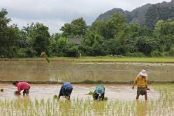 Campos de Vang Vieng