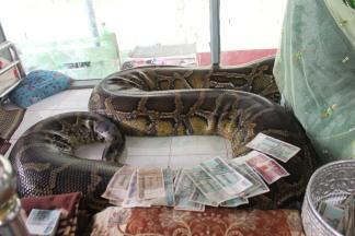 Serpiente de más de 100 años